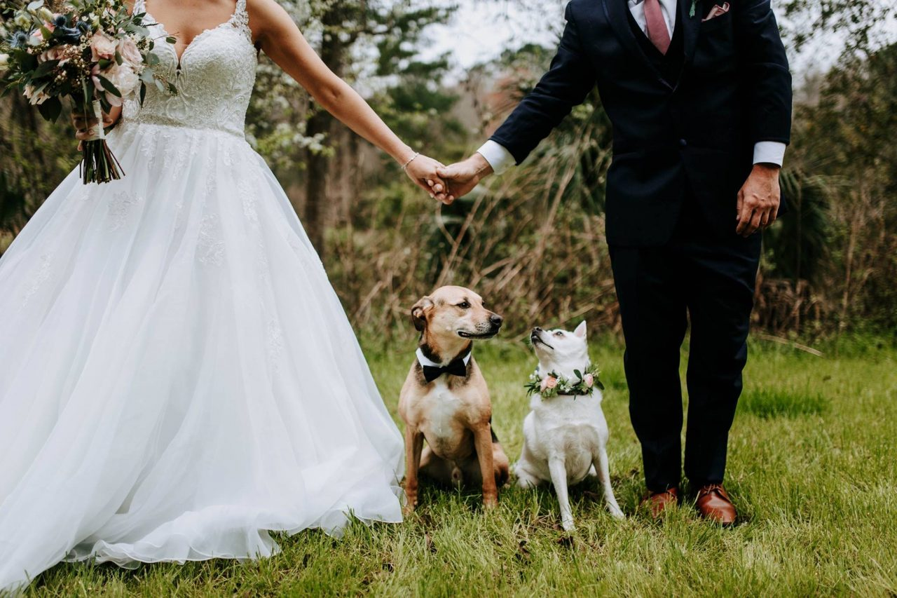 bride and groom with dogs wedding venue